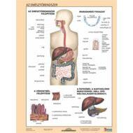 Tanulói munkalap - Az emésztőrendszer