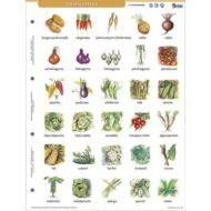Tanulói munkalap - Zöldségek