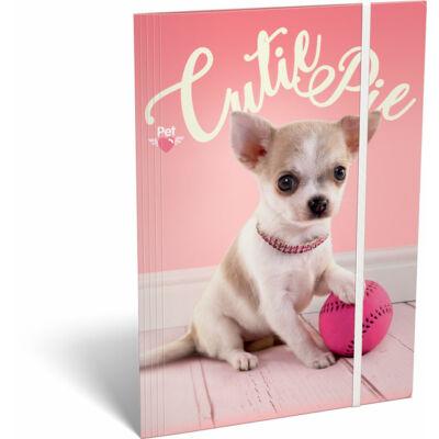 Pet Cutie Pie kutyás A4 gumis mappa csivava