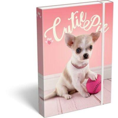 Pet Cutie Pie kutyás A4 füzetbox csivava